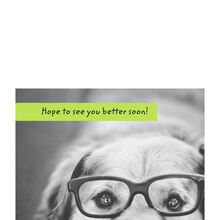 Dog With Glasses Photo