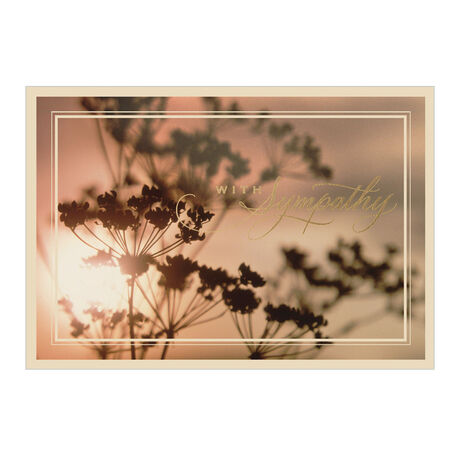 Sunlight & Silhouette