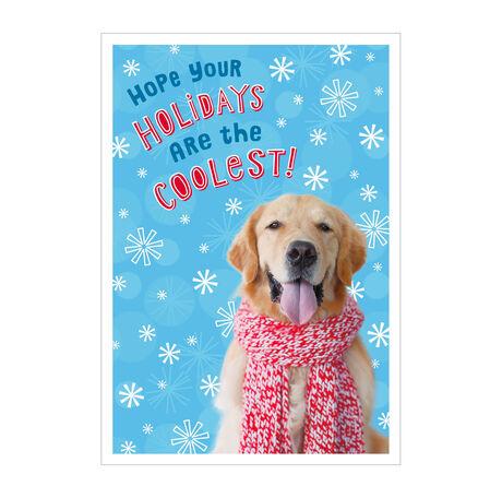 Fun Holiday Dog Photo