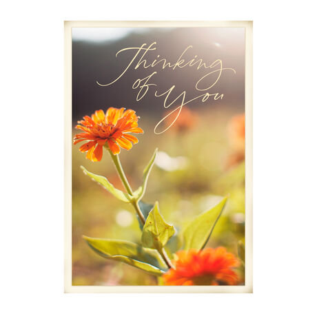Zinnia blooms cards for business employees hallmark business images m4hsunfo
