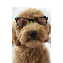 Dog in Glasses Business Hallmark Card