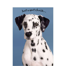 Dalmatian Spot Check Business Hallmark Card