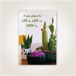 Photography featuring succulents and earthy green lettering inspires excitement over the possibilities found in a new place.