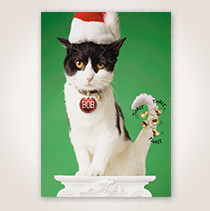 Bells on Cat Funny Holiday Business Hallmark Card for Customers and Employees